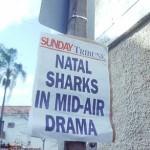 Sharks 4